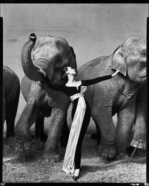 Dovima with Elephants by Richard Avedon, 1955