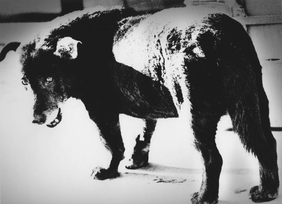 Daido Moriyama Stray Dog