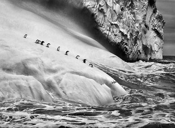 Genesis, Penguins