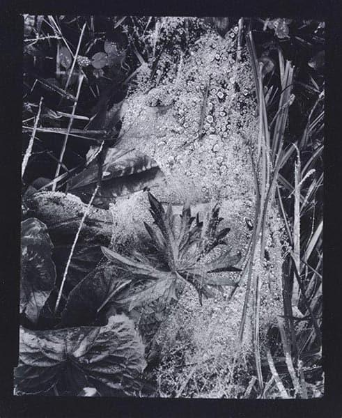 Cobweb, Paul Strand