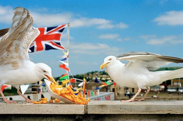 Martin Parr, Seagulls